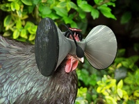 Oculus Rift made the news last week for what's being called an original idea from a university professor / developer — putting chickens in a virtual barnyard while each are actually in an industrial chicken factory wearing a headset: http://www.socaltech.com/latest_oculus_rift_idea_the_matrix_but_for_chickens/s-0055074.html The concept isn't actually new… back in 2003 an animal rights activist organization released a video called TheMeatrix which is pretty disturbing: http://www.youtube.com/watch?v=rEkc70ztOrc&sns=em I'd want to distance myself from this v. r. application if I were O. R.