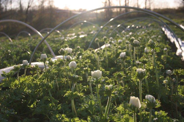 Southerly Flower Farm 5.jpeg