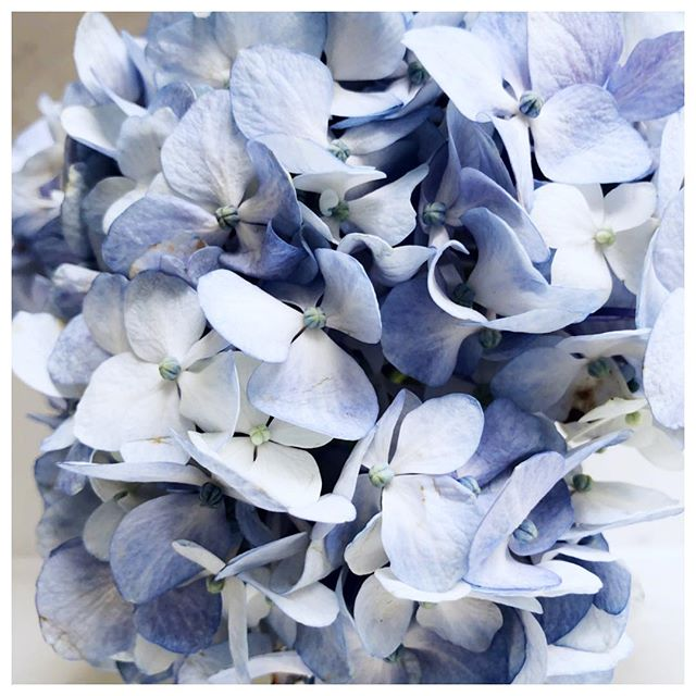 Favorite accessory? #flowers 🌷 . . . . . . #interiordesign #furniture #interiordecorating #homedecor #marasilberstudio #hydrangea #blue
