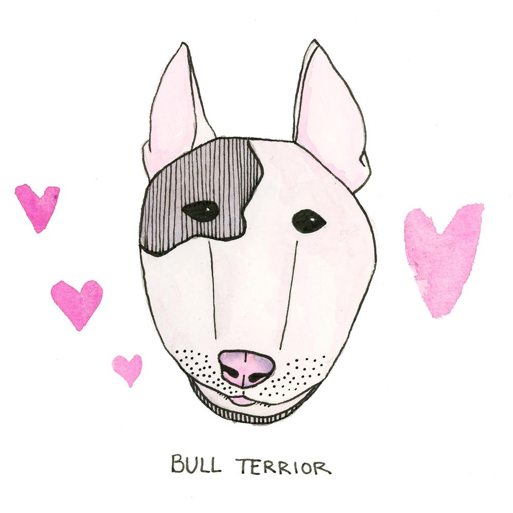 BullTerrior.jpg