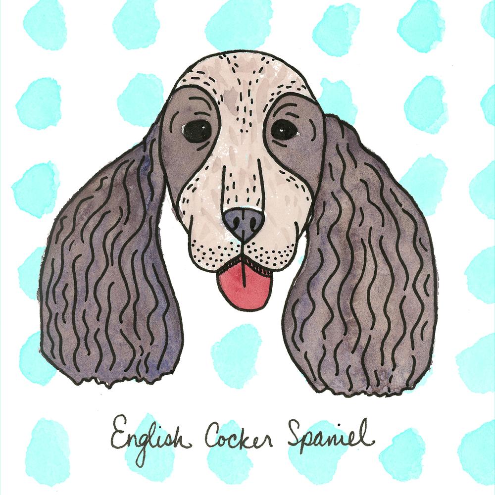 EnglishCockerSpaniel.jpg