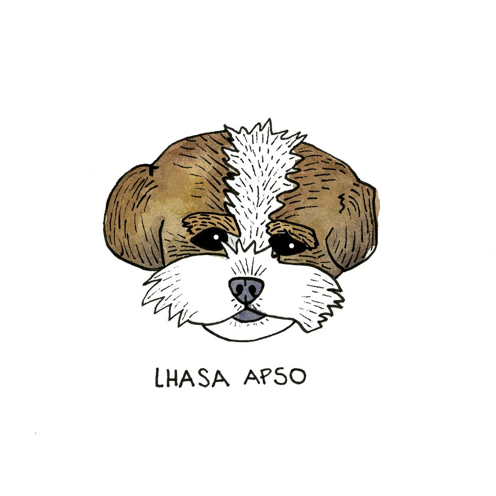 LhasaApsa0882.png