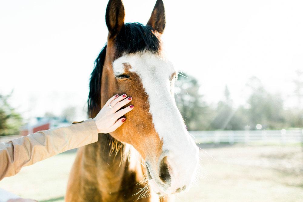 Horse Farm Engagment - Sabrina Leigh Studios - Northern Michigan Wedding Photographer 38.jpg