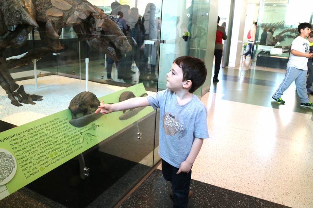 With his favorite dinosaur, the ankylosaurs, at the Museum of Natural History.