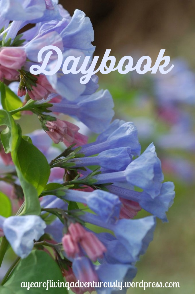 daybook tag