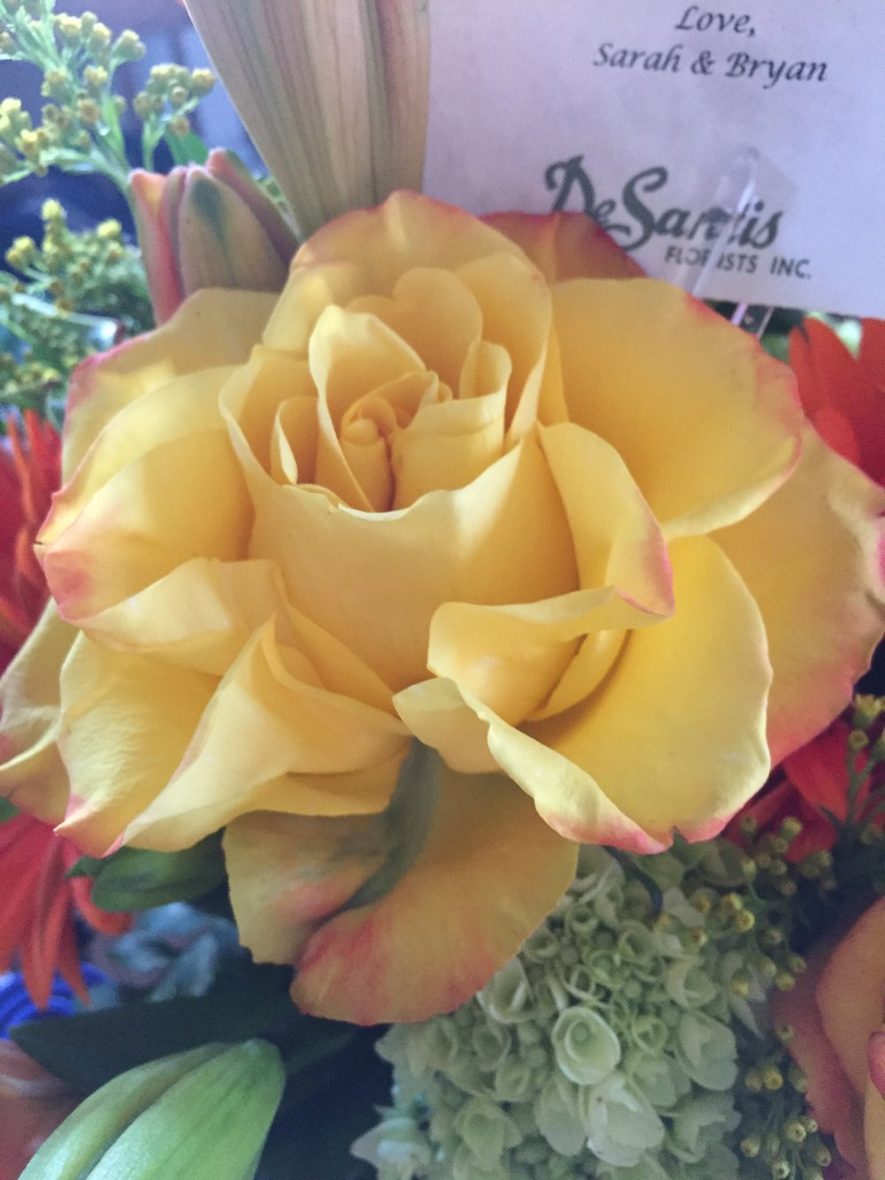 A gorgeous rose from the bouquet my brother and sister in law sent me, celebrating the book!