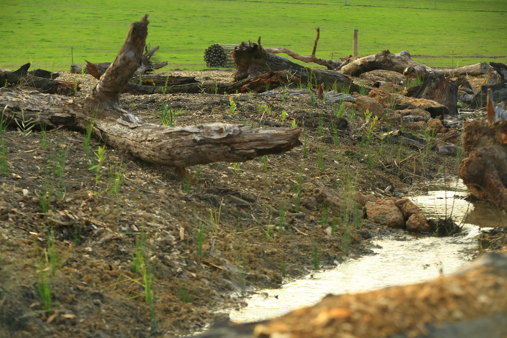 Riparian Planting -