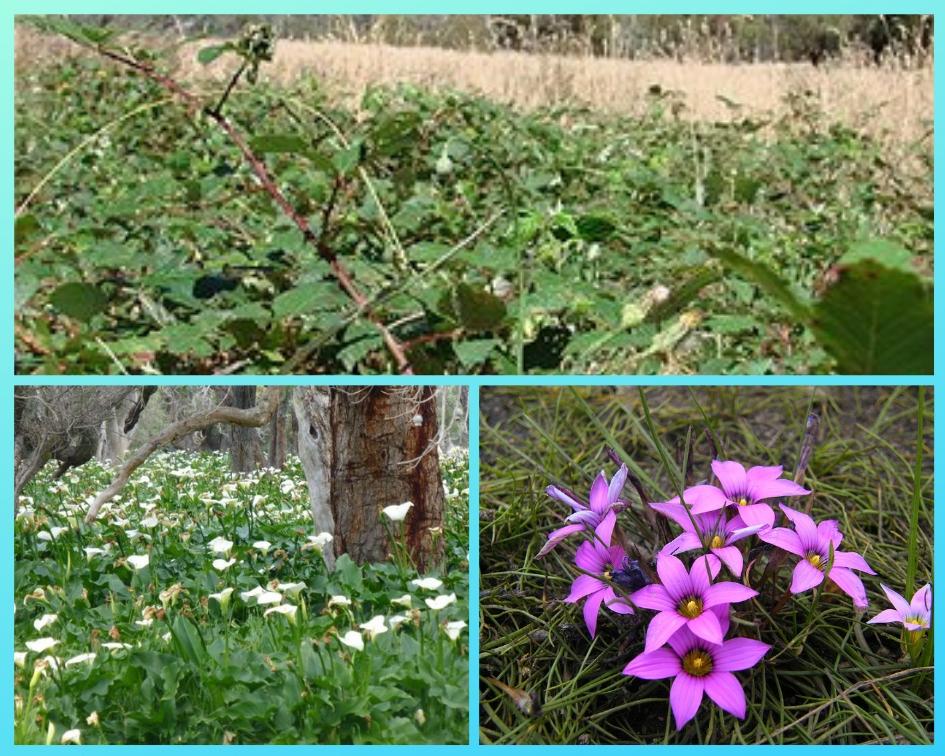 Weeds Collage.jpg