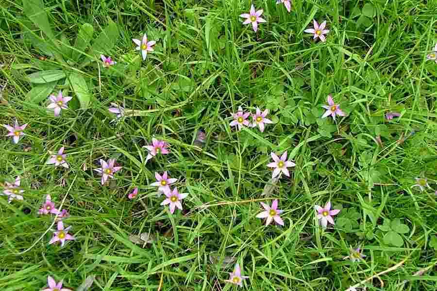 Pests: Flora & Fauna