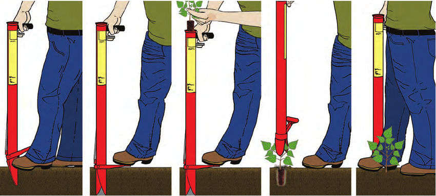 Planting-tubes-have-pointed-jaws-that-open-the-planting-hole-The-plant-is-then-dropped.png