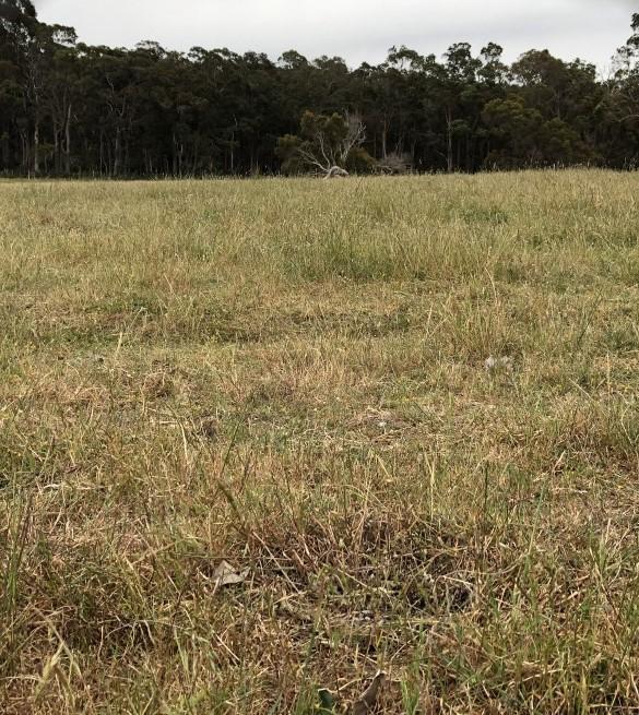 Guildford Grass Control Paddock November 2018