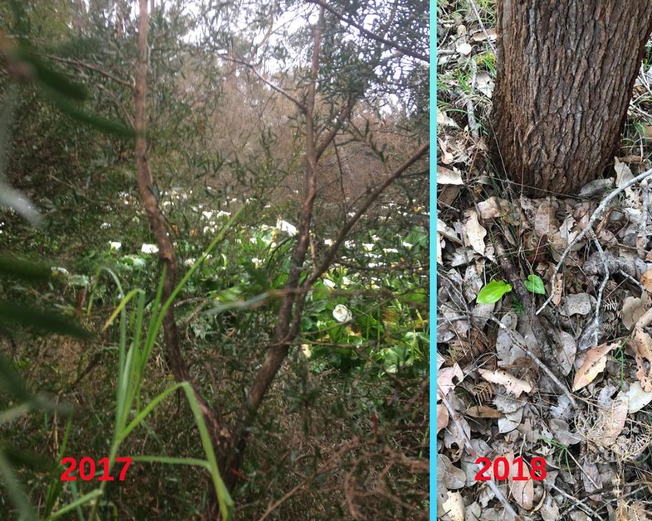 Arum Before & After (1).jpg