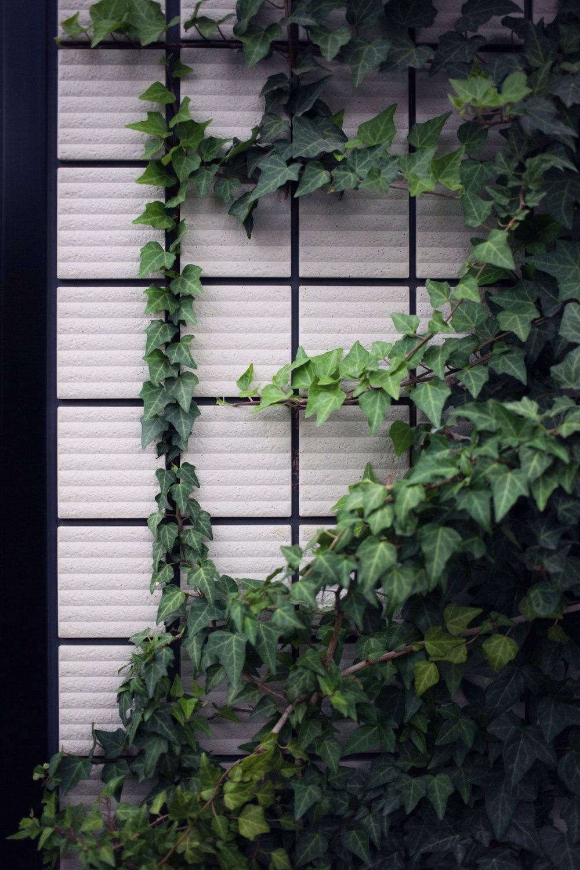 Ivy Grid