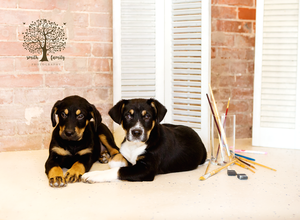 Pups used in the calendar shoot for LARAS House.
