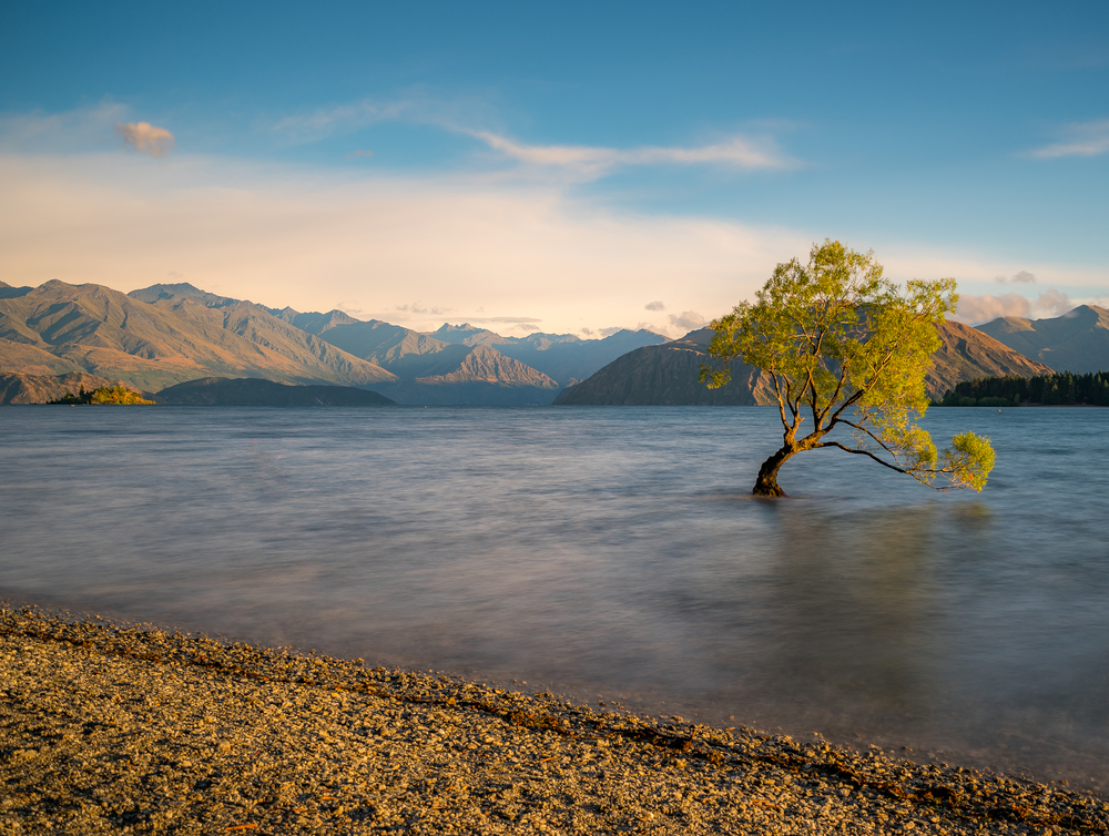 wanaka tree-500px (1 of 1).jpg