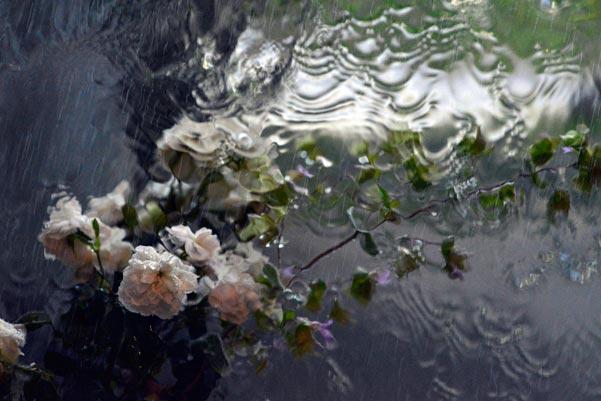 雨のもよう5/2016.6.18-7.18