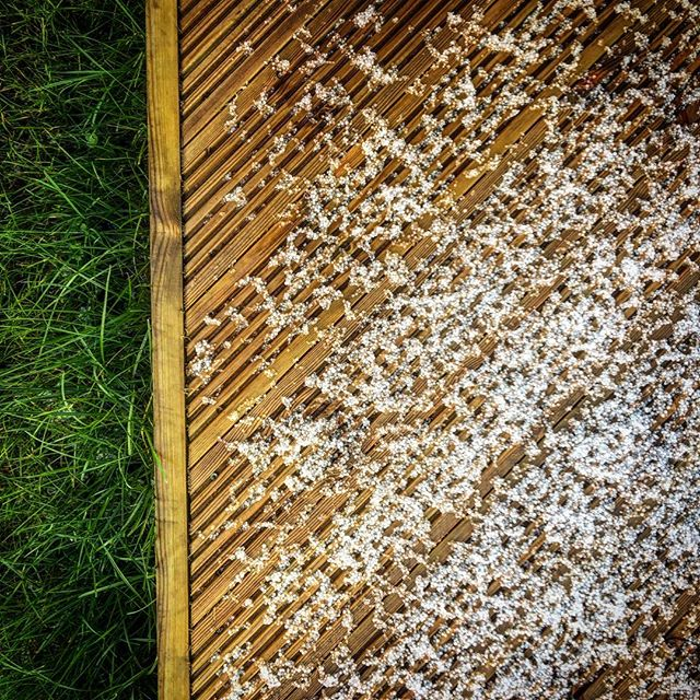 Hailstones #100days #100dayproject #100daysoflookingdown