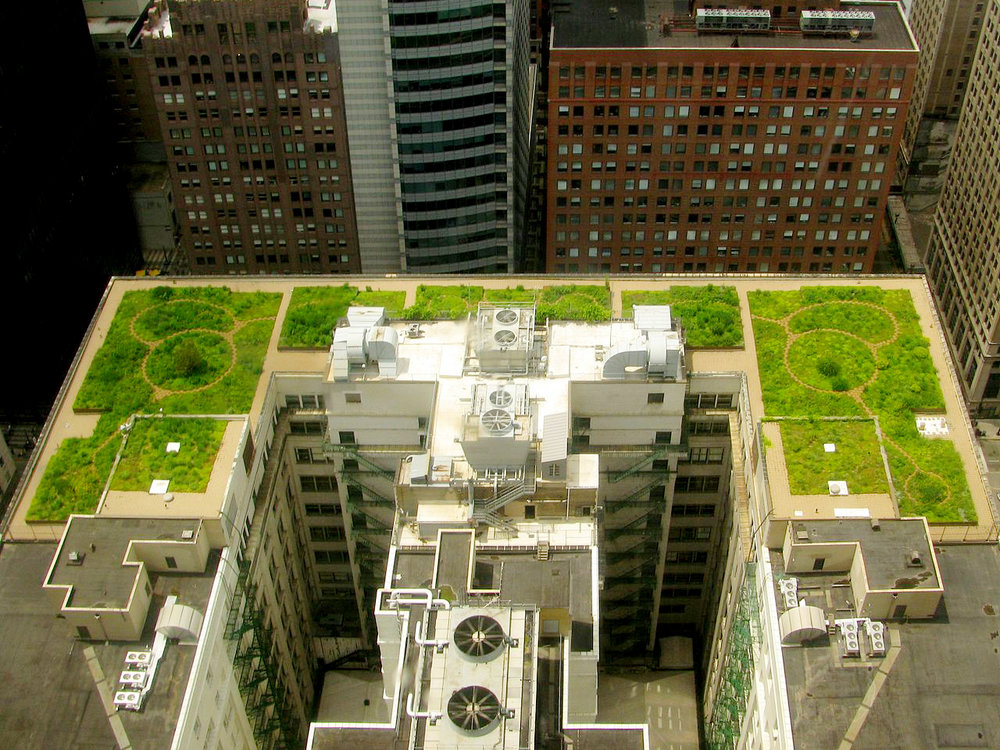 1280px-Chicago_City_Hall_green_roof_edit.jpg