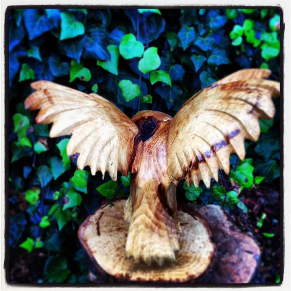 254 20131217 Barn Owl Large (1).jpg