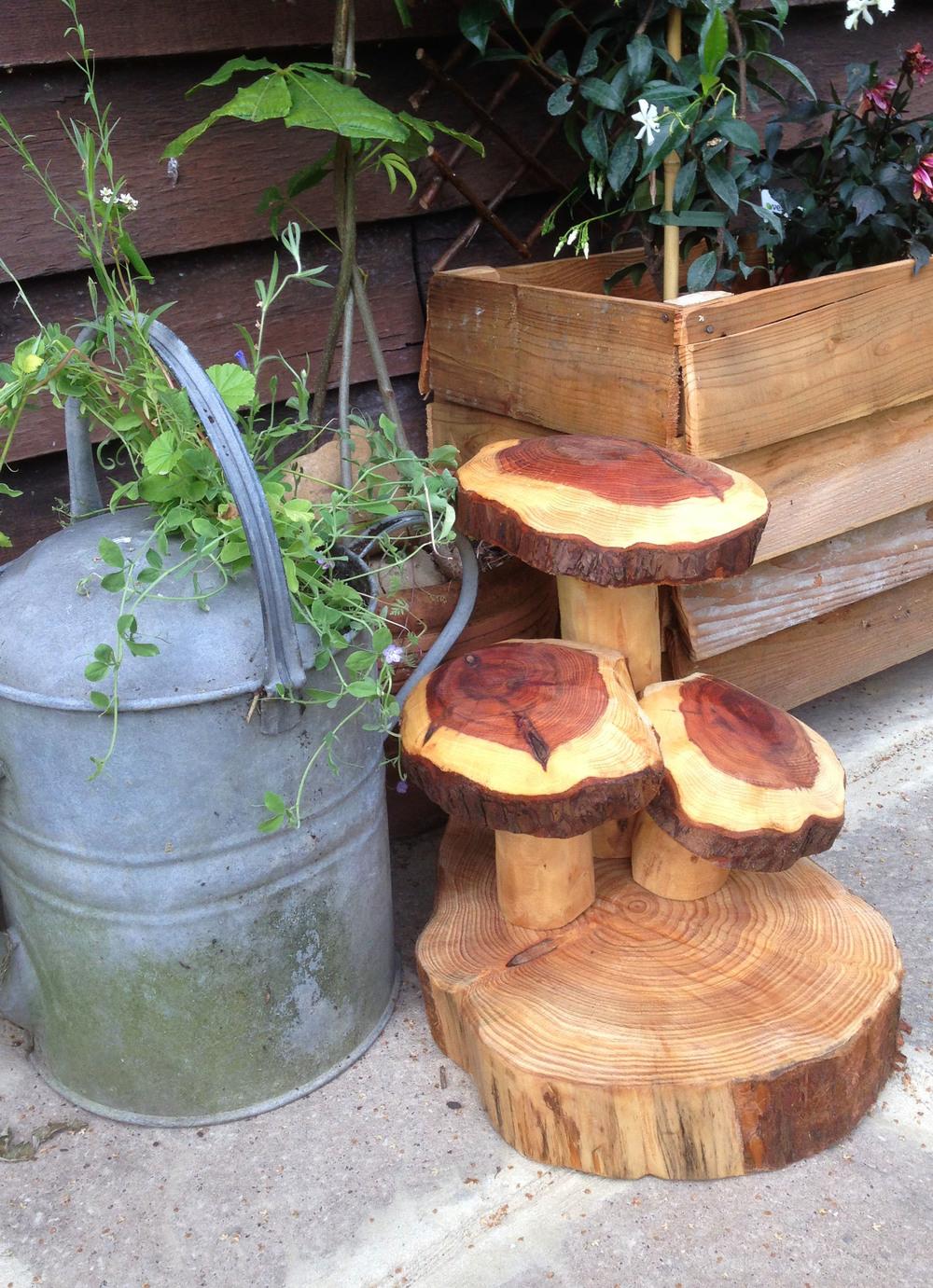 20140725 Mushroom Cluster Yew (2).jpg