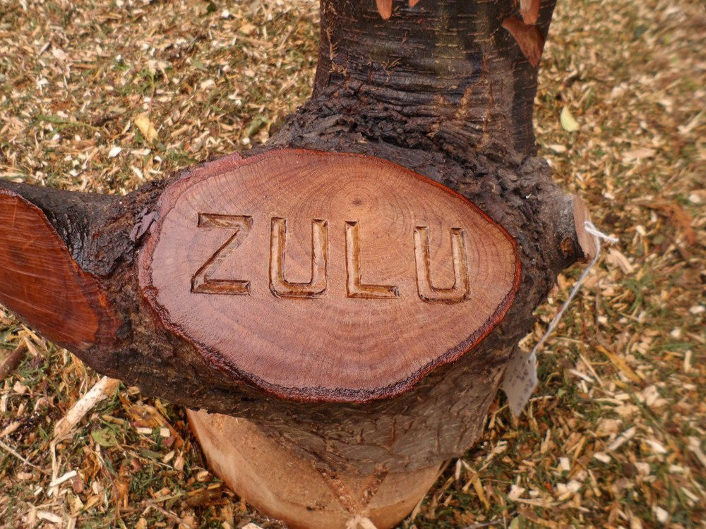 011 Zulu (2).JPG