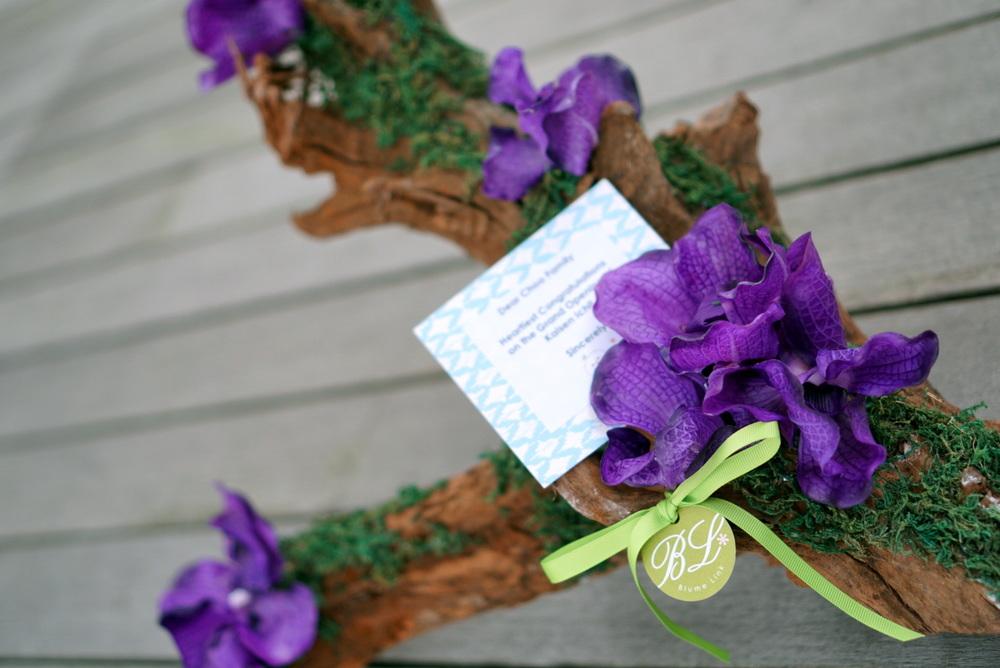 Vanda orchids on driftwood.JPG