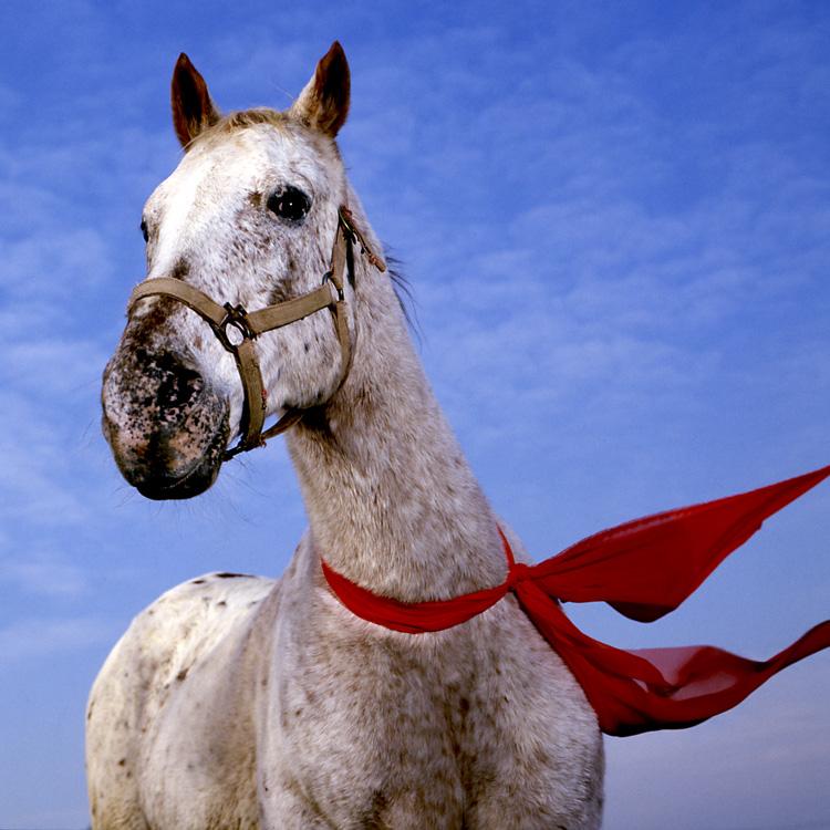 scarfhorse.jpg
