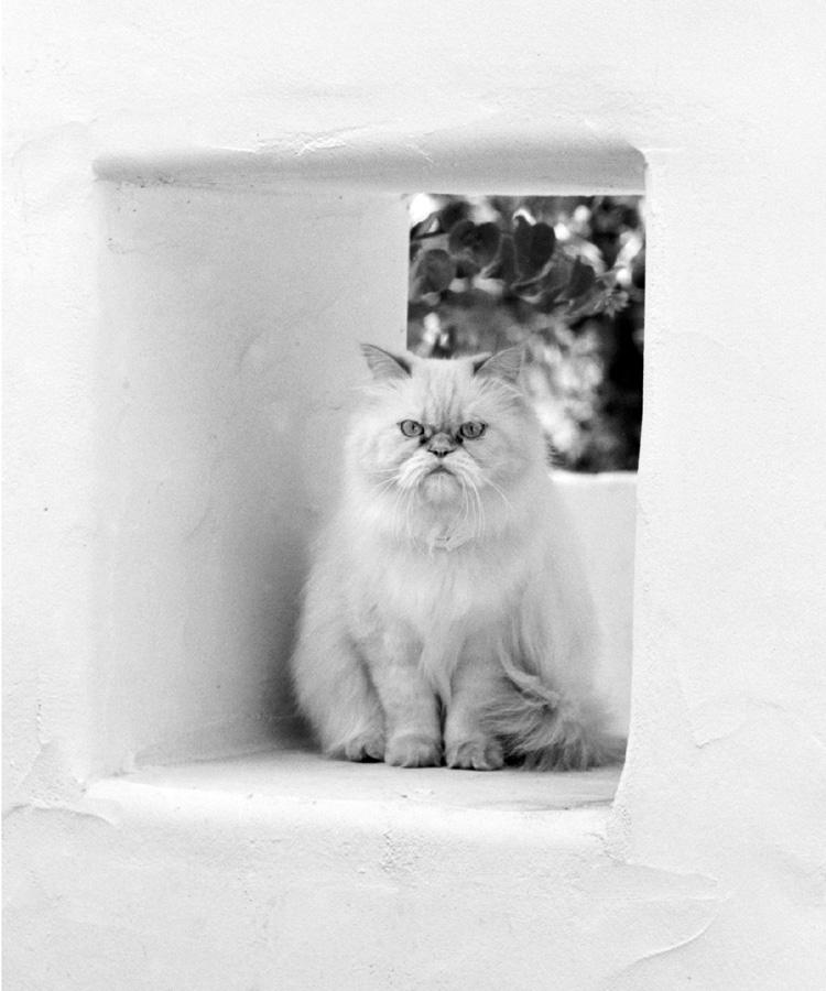 whitecat.jpg