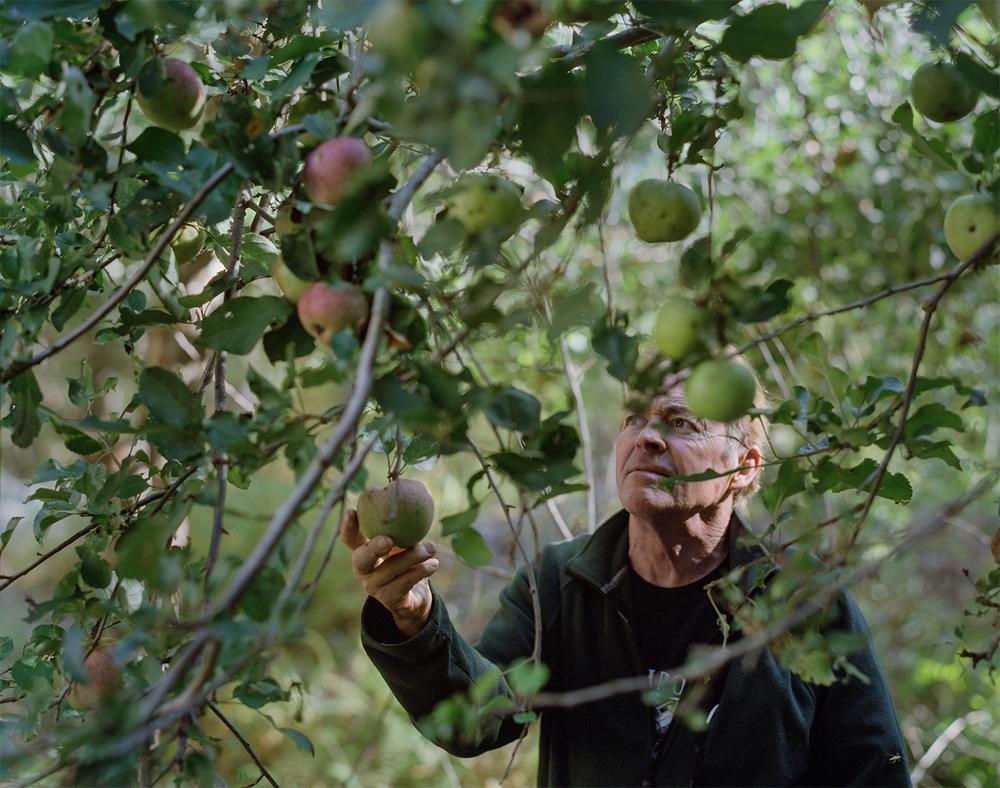 Dad Apple .jpg