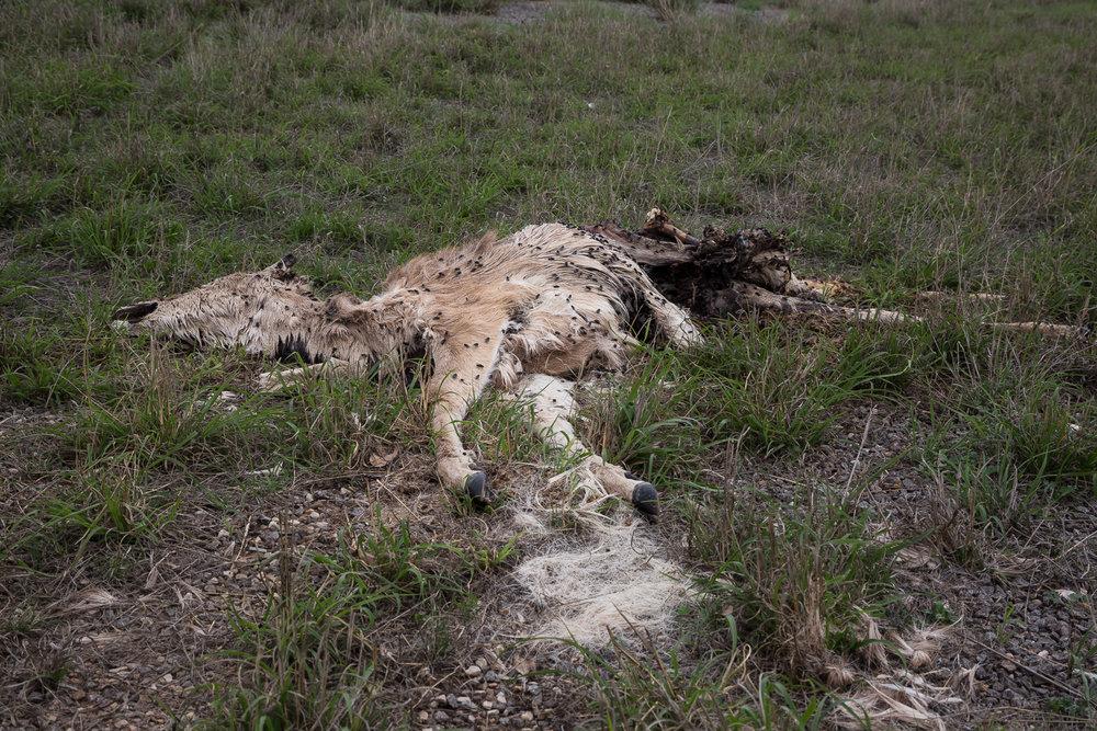 Casualty • Ozona, TX
