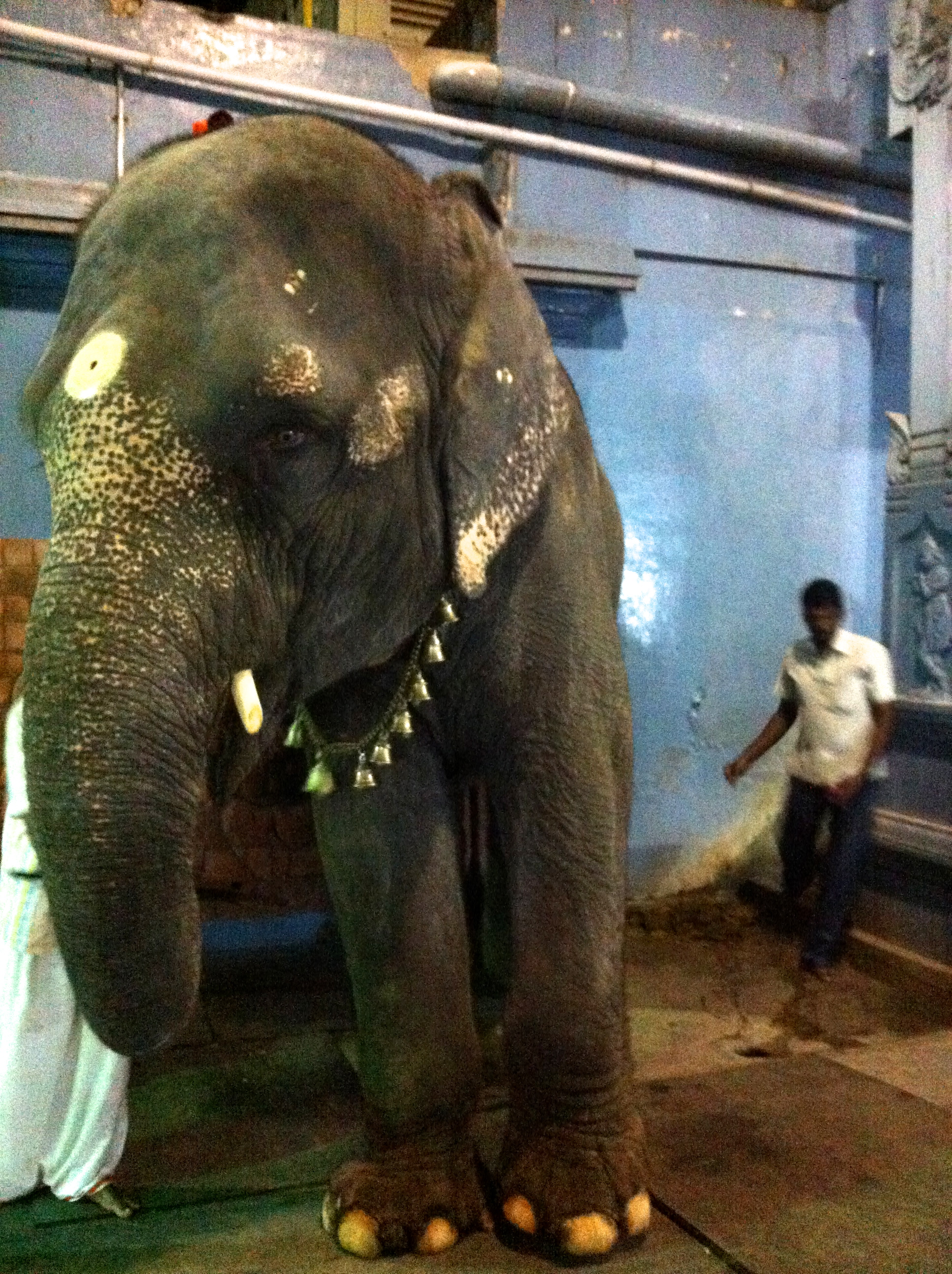 Lakshmi the elephant :)