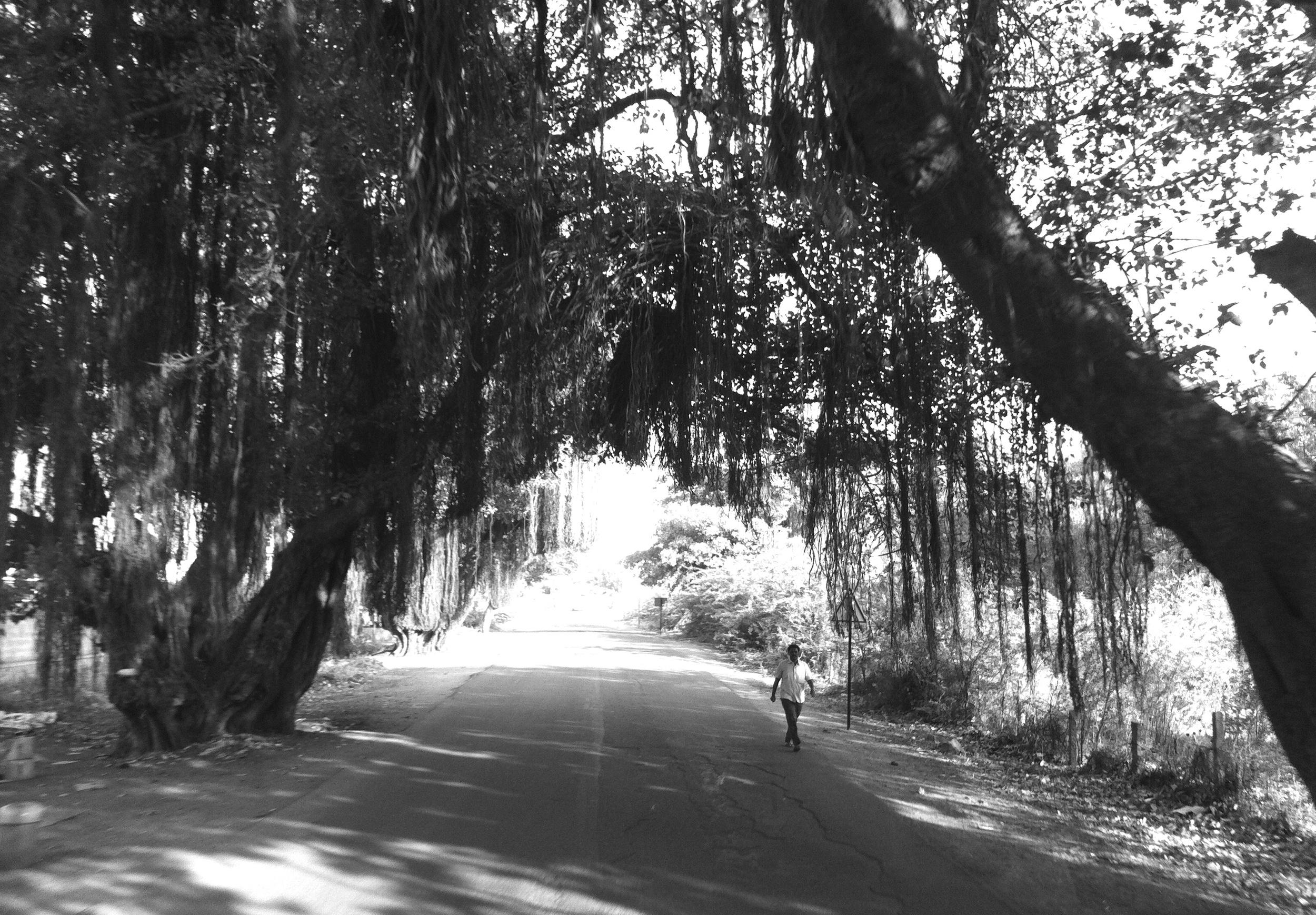 banyan tree underpasses
