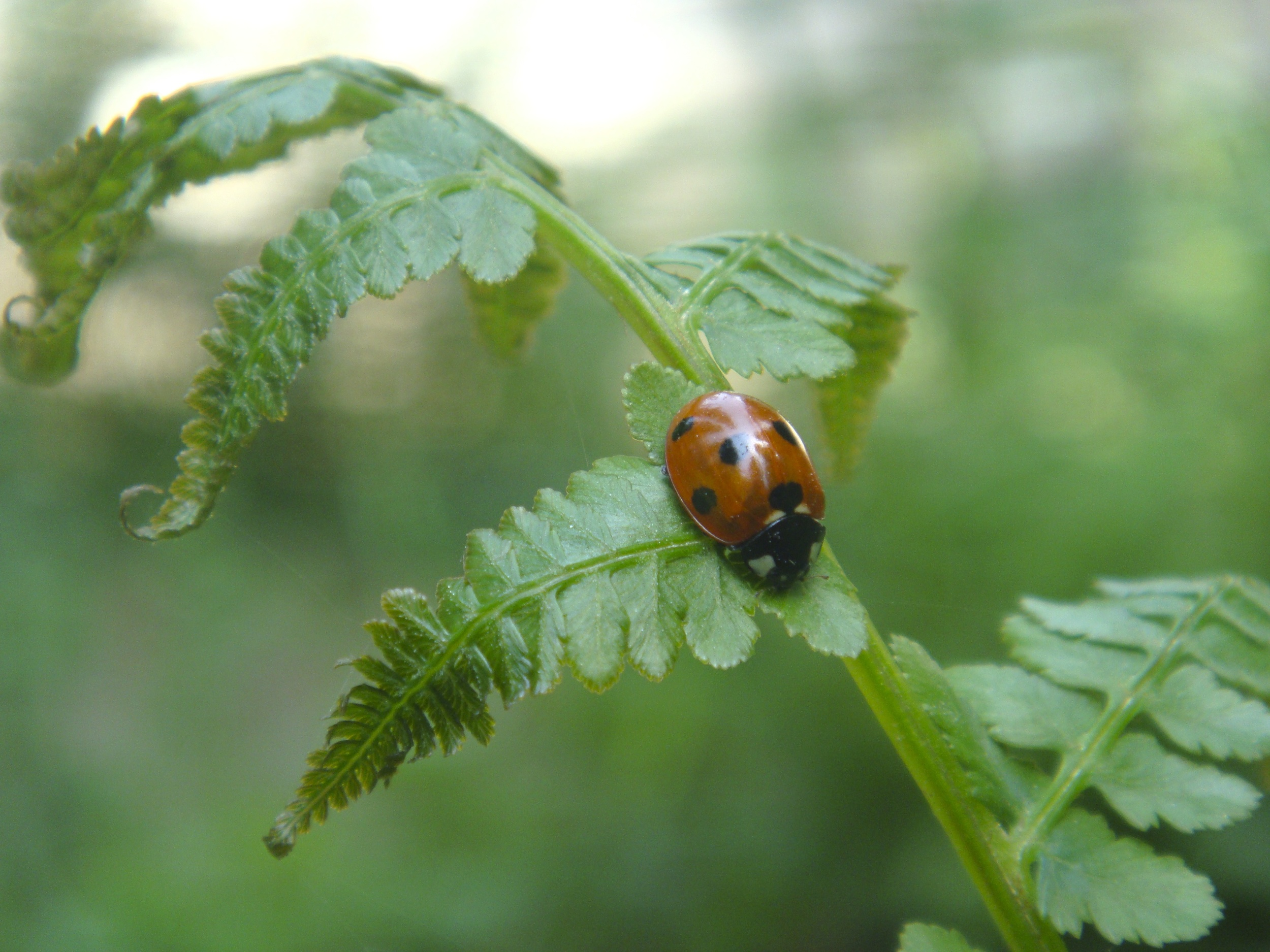 lady bird on a leaf! (shot by Prarthna)