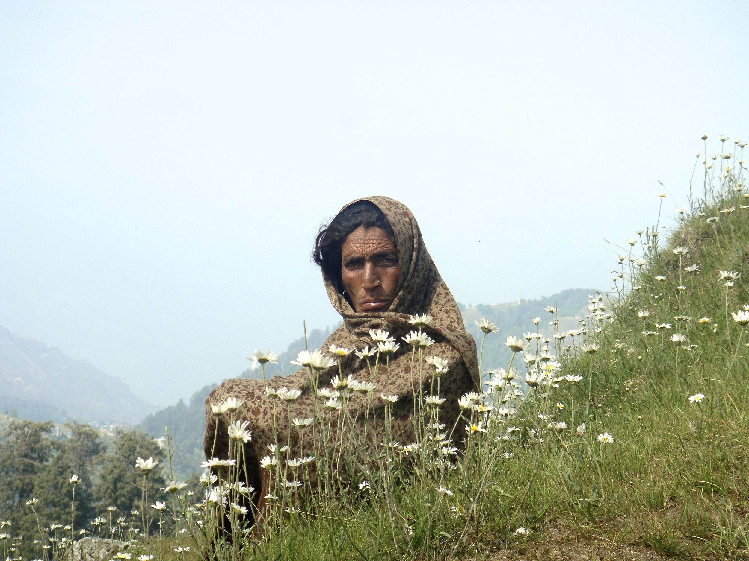 Khalima, a peasant who came from Pathankhot to Dainkund with her cattle (photo by Prarthna)