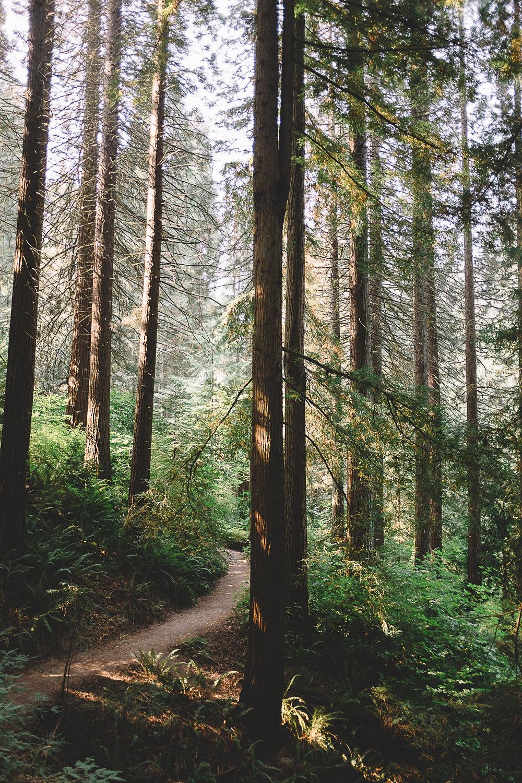 Hoyt Arboretum-5.jpg