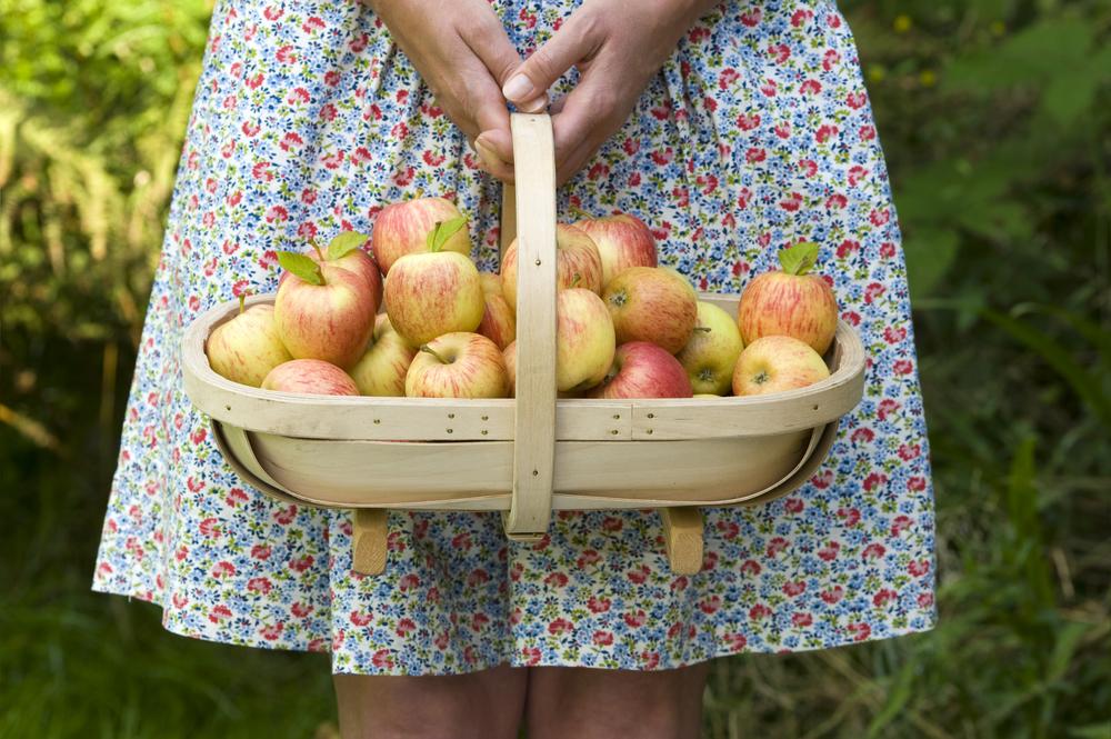 Gjør deg klar for å hente Norges beste epler hjem fra Hvaler Eplefestival 2015