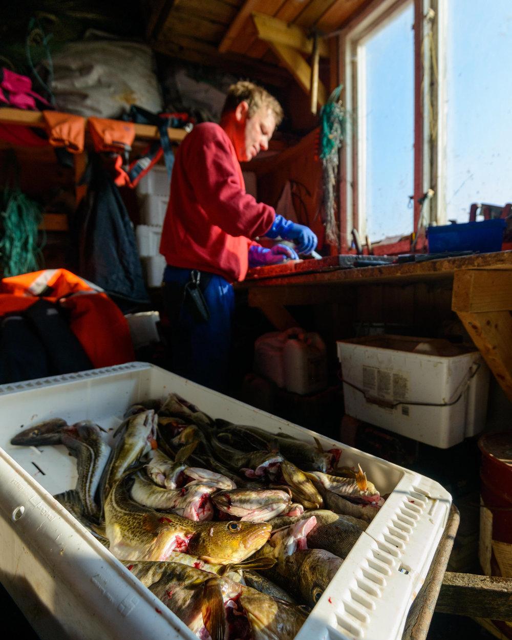 Vi håper for fremtiden at det er kun havets delikatesser fiskerne trekker opp fra både Hvalers farvann og andre steder på kloden.