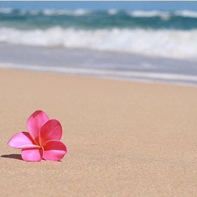 Aquela hora do dia que você está com a cabeça nas férias... 🌺🌊☀️ . 📷@lilafromrio