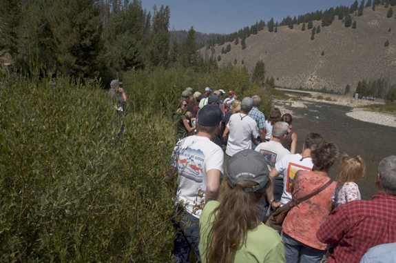 IRU's annual Sawtooth Salmon Festival features tours of wild chinook salmon spawning in the Salmon River. (Photo by Gary Grimm)