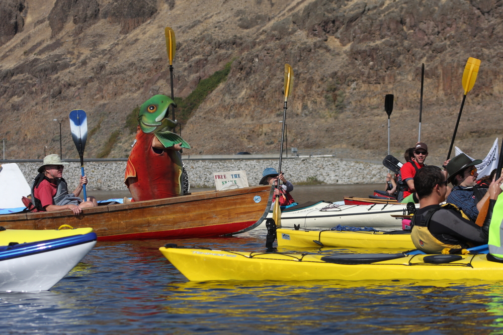 Betsy Hammar, dressed as a sockeye salmon, helps lead 300-plus people in cheers on the lower Snake River Oct. 3 during the Free the Snake Flotilla. Photo by Greg Stahl.
