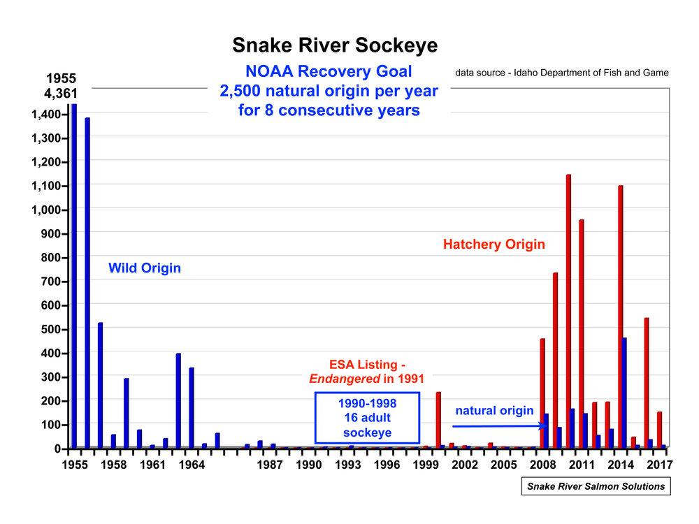Sockeye Graph.jpg