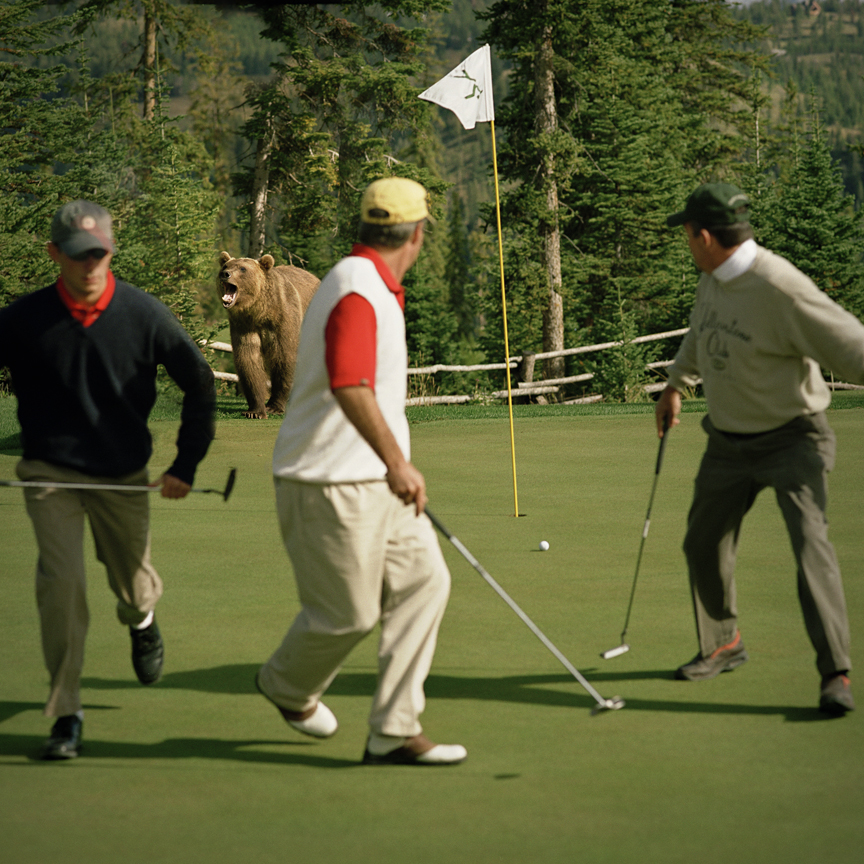 KN 29. LOST BALLS - Grizzly Bear on Golf Course. Montana. Full MR-PR Release.jpg