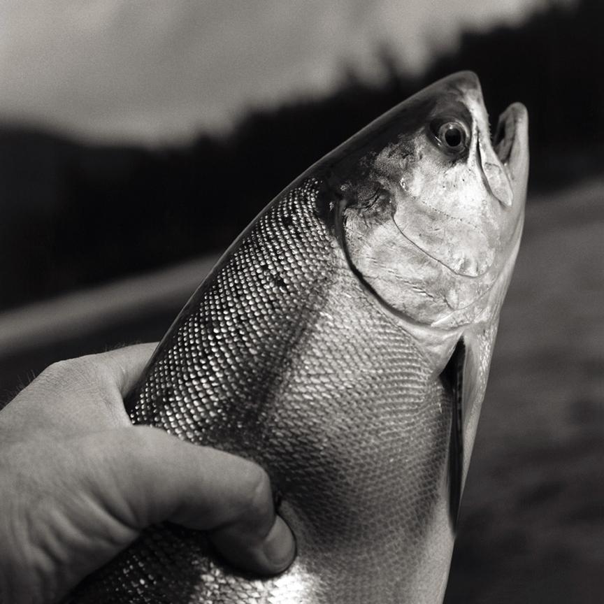 16-KN84. Salmon.jpg
