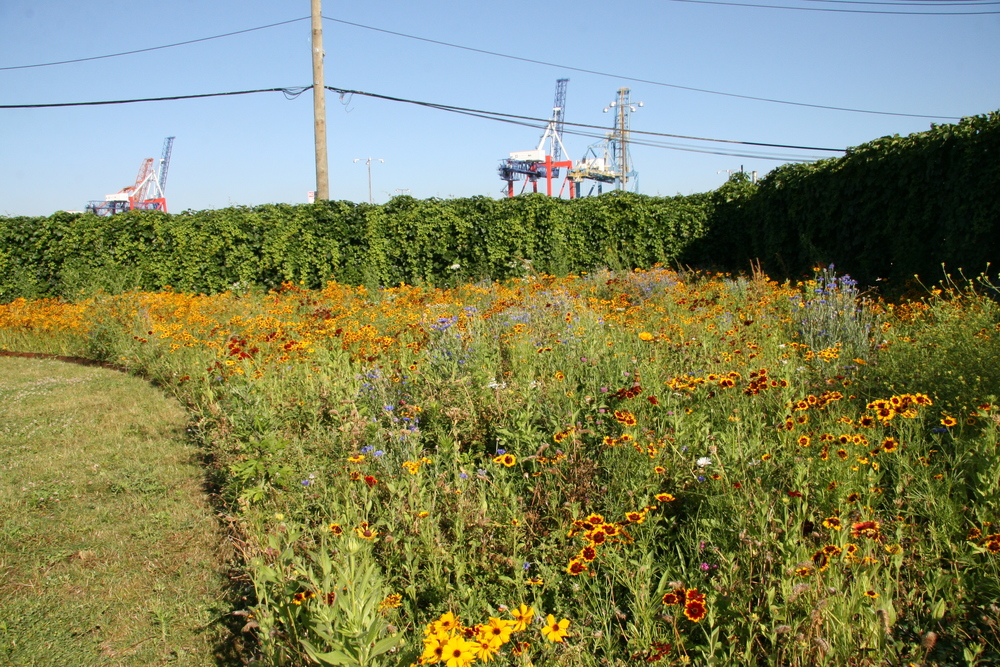 BA_Urban Meadow_13.JPG