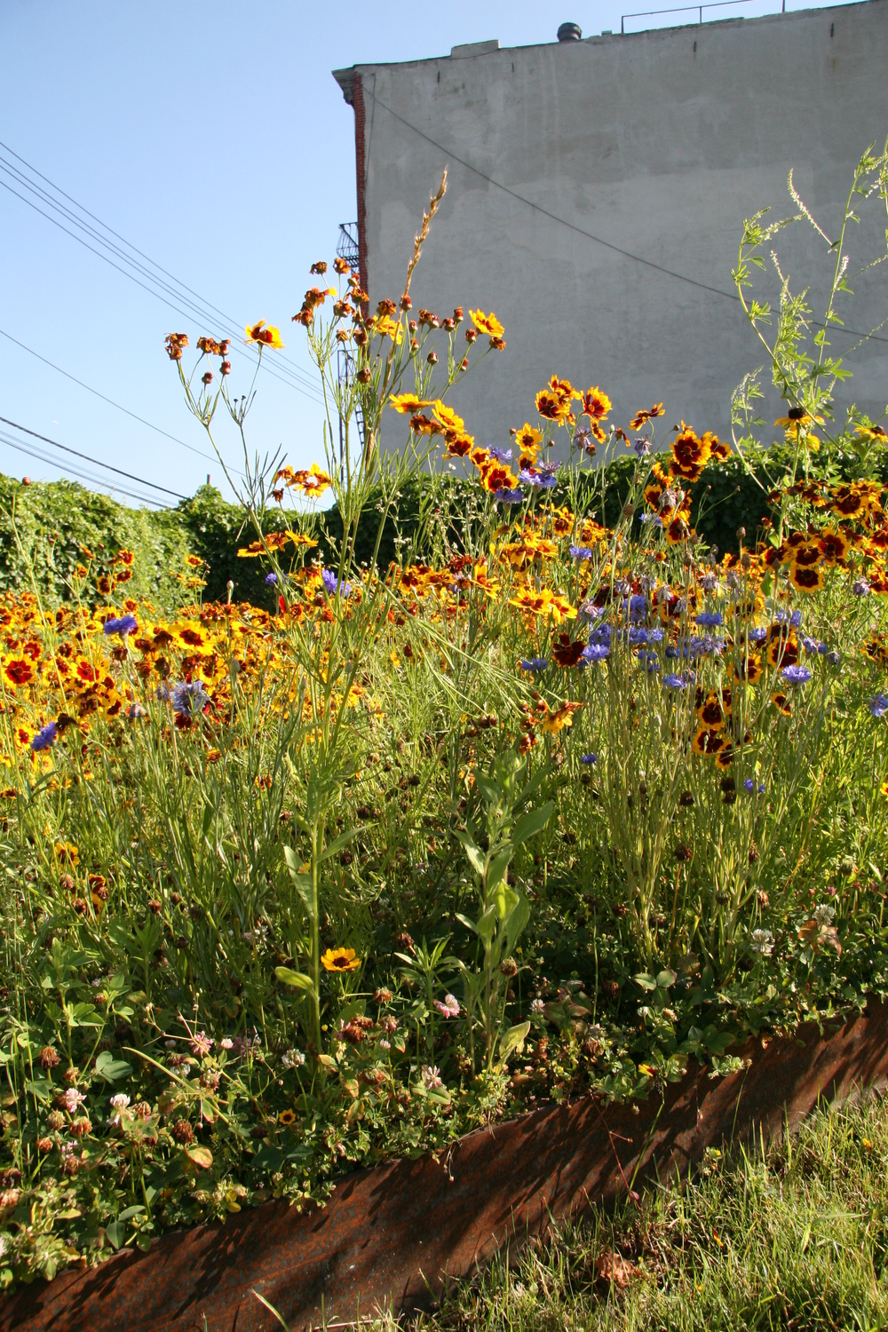 BA_Urban Meadow_14.JPG