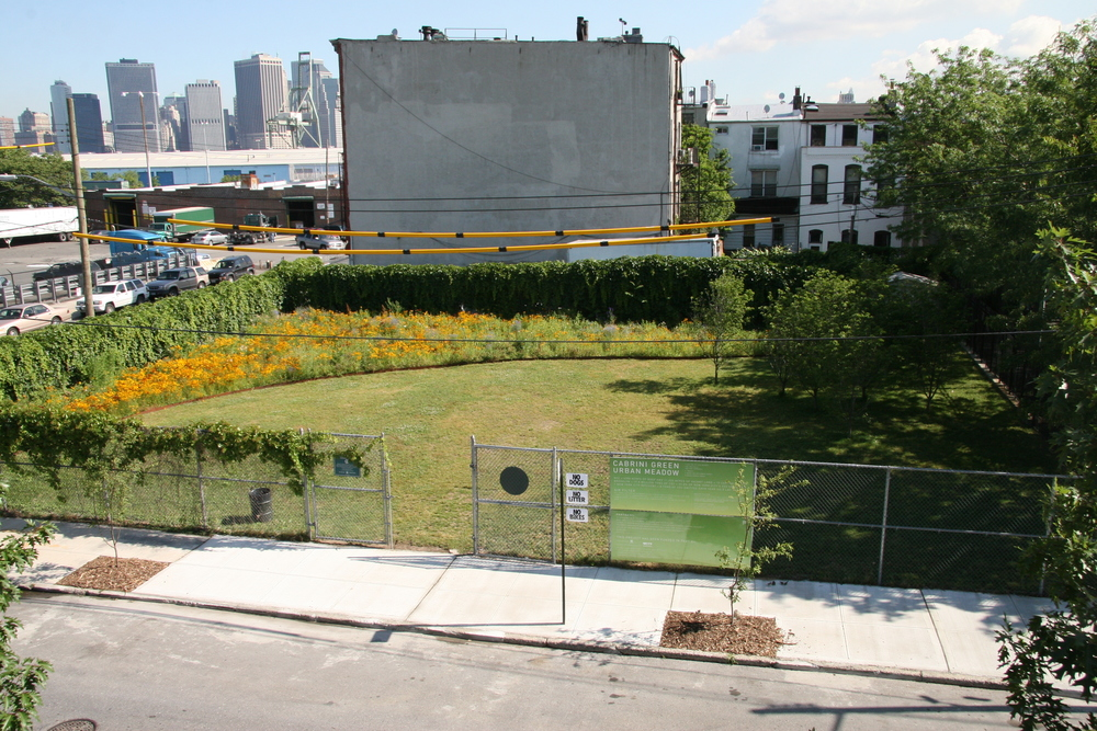 BA_Urban Meadow_17.JPG