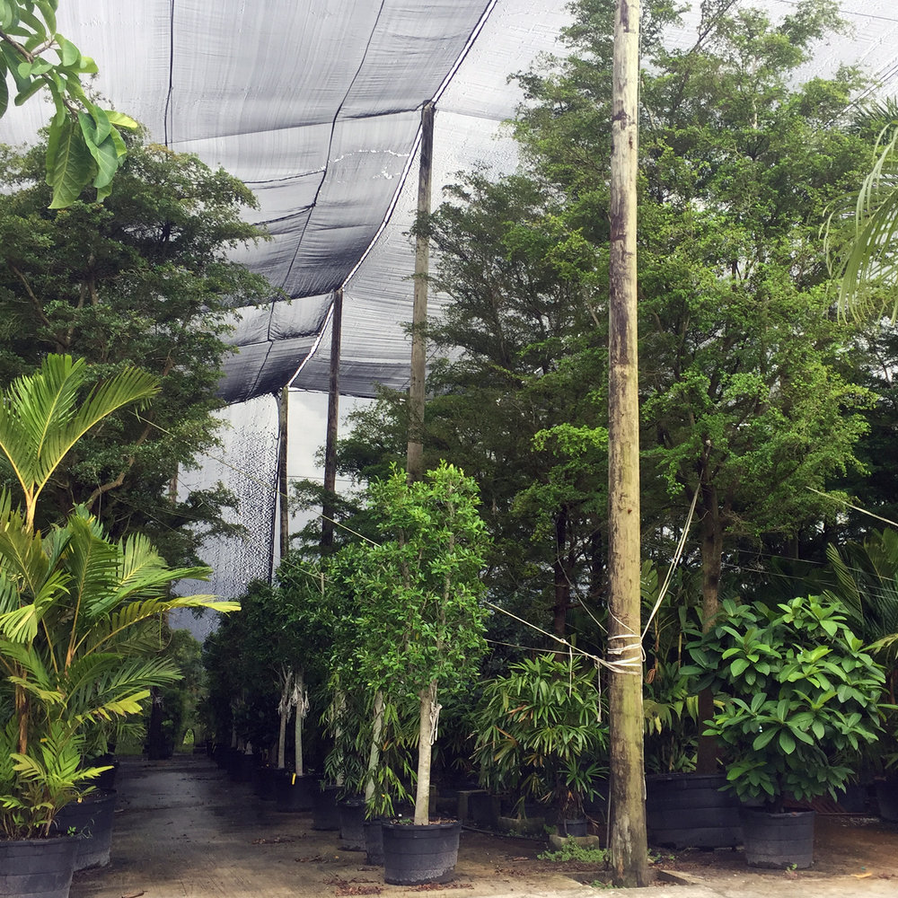 - Florida nursery visit with RPBW for the interior trees at Soho Towers.Read more...