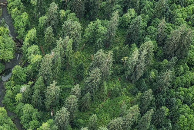 #greatbearrainforest #savethegreatbears #stoptrophyhunting #pnw