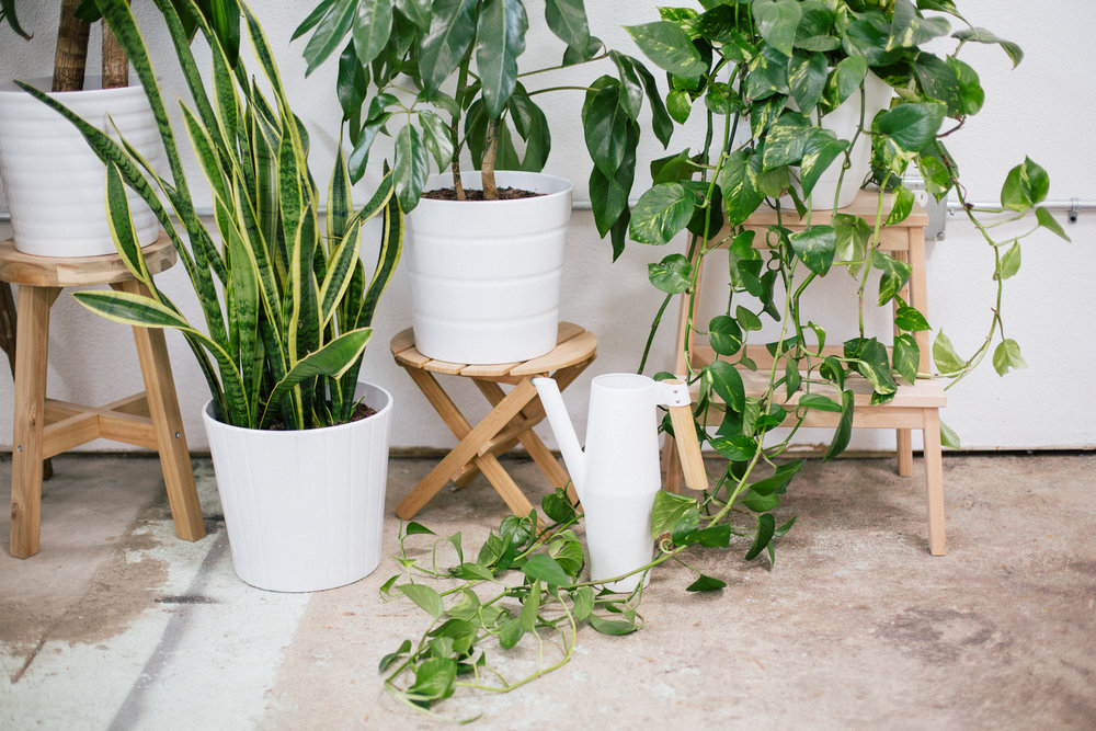 Paper Craft Pantry How To Keep Plants Alive