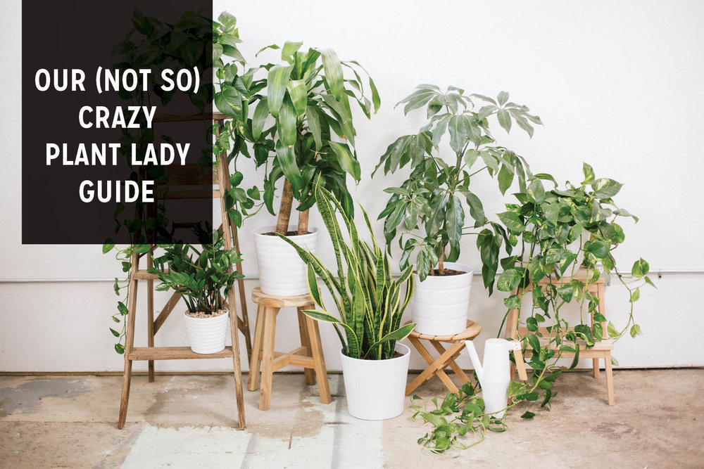 Paper Craft Pantry House Plant Care Guide